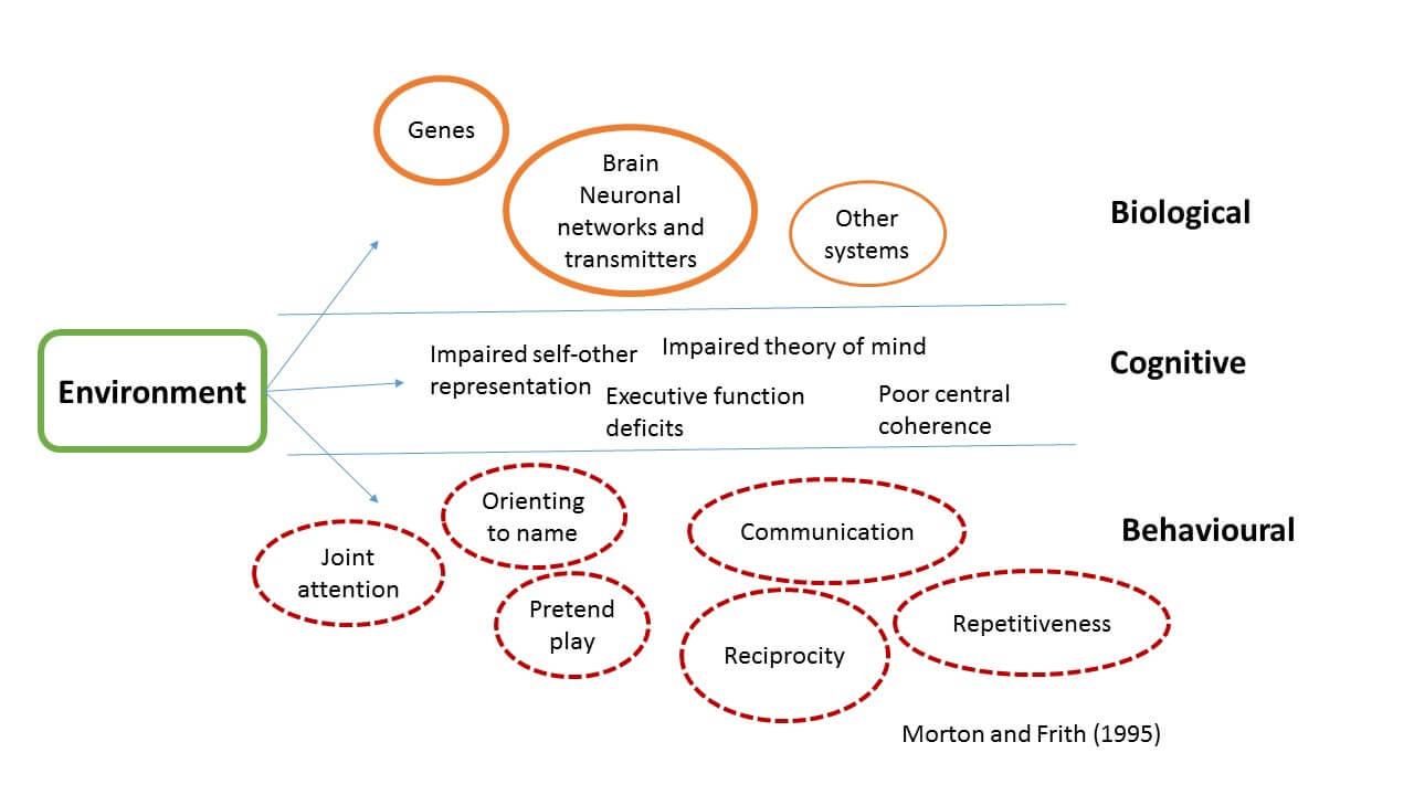 The Social Brain Enablenet Info border=